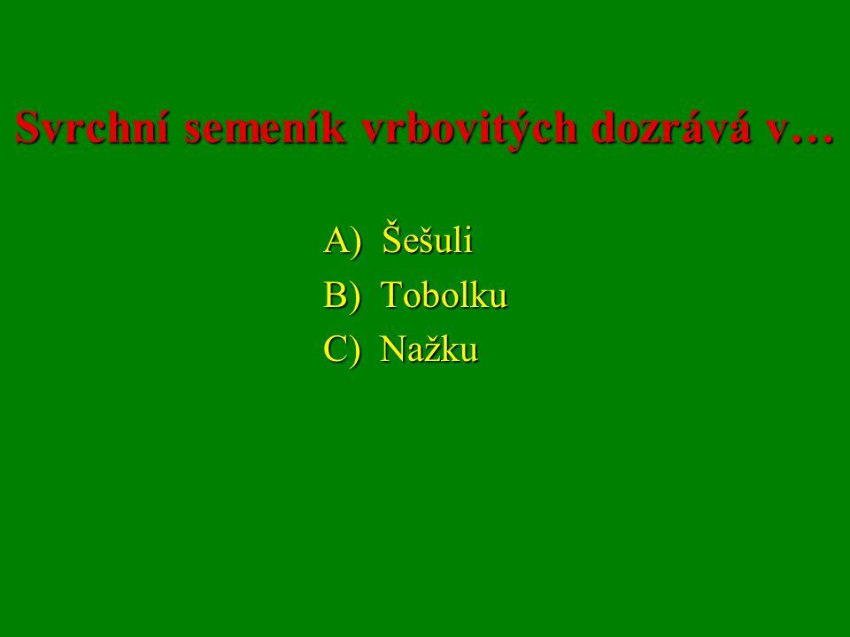 Svrchní semeník vrbovitých dozrává v… A) Šešuli A) Šešuli B) Tobolku B) Tobolku C) Nažku C) Nažku