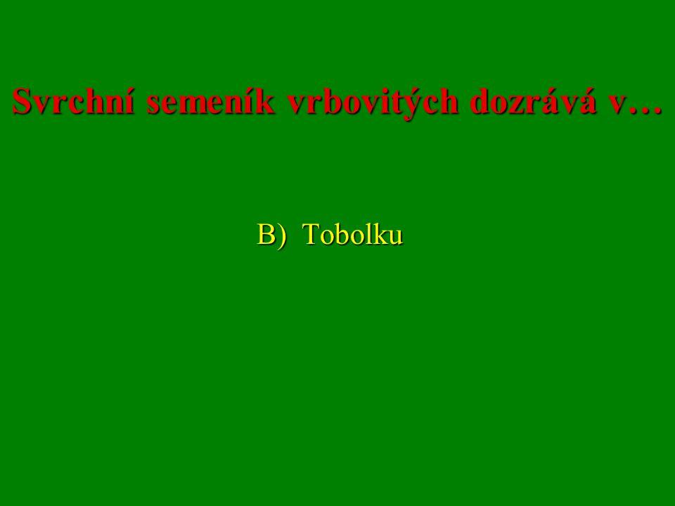 Svrchní semeník vrbovitých dozrává v… B) Tobolku B) Tobolku
