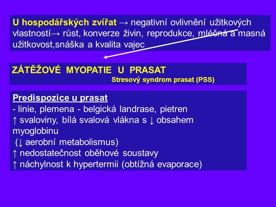 PSE svalovina bledé, měkké, vodnaté (pale,soft, exudative) Příčiny: -Abnormálně rychlá glykogenolýza před, při i po porážce → -okyselení → pH 5,4 -5,8 již 1 hod.