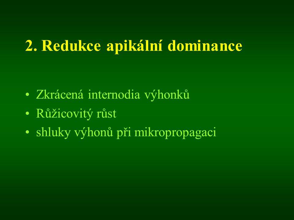 2. Redukce apikální dominance Zkrácená internodia výhonků Růžicovitý růst shluky výhonů při mikropropagaci