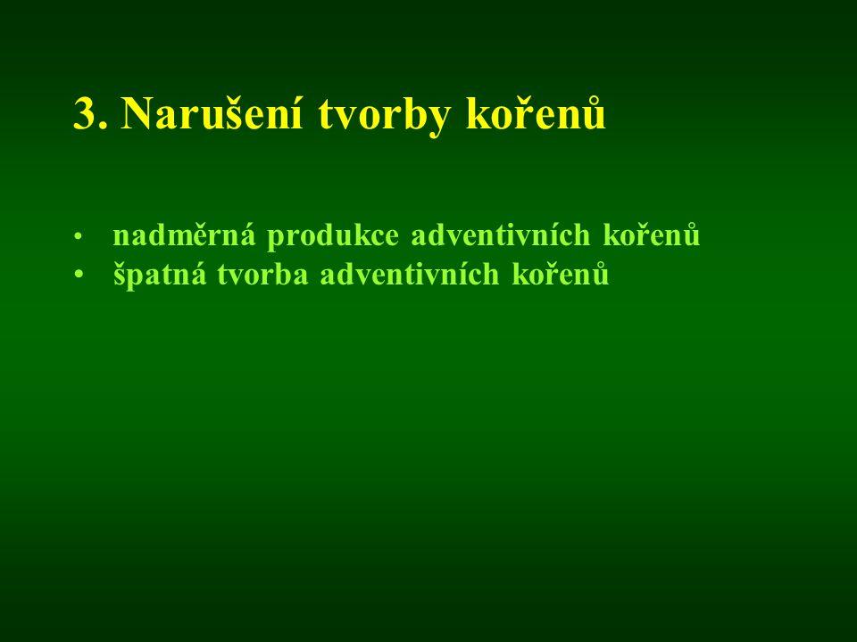 3. Narušení tvorby kořenů nadměrná produkce adventivních kořenů špatná tvorba adventivních kořenů