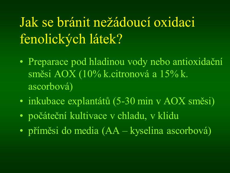 Jak se bránit nežádoucí oxidaci fenolických látek? Preparace pod hladinou vody nebo antioxidační směsi AOX (10% k.citronová a 15% k. ascorbová) inkuba