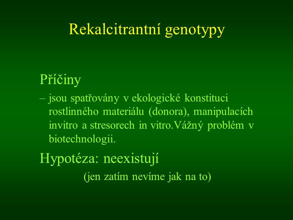 Rekalcitrantní genotypy Příčiny –jsou spatřovány v ekologické konstituci rostlinného materiálu (donora), manipulacích invitro a stresorech in vitro.Vá