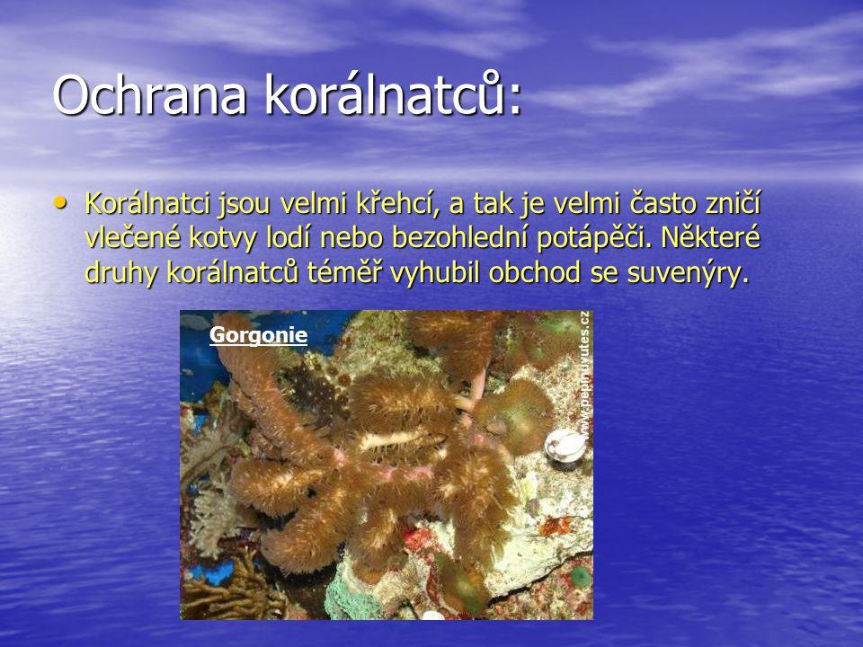 Ochrana korálnatců: Korálnatci jsou velmi křehcí, a tak je velmi často zničí vlečené kotvy lodí nebo bezohlední potápěči. Některé druhy korálnatců tém