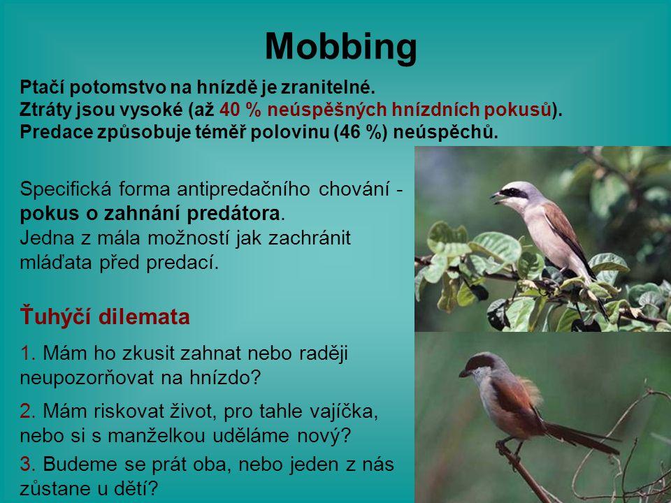 Mobbing Specifická forma antipredačního chování - pokus o zahnání predátora. Jedna z mála možností jak zachránit mláďata před predací. 1. Mám ho zkusi