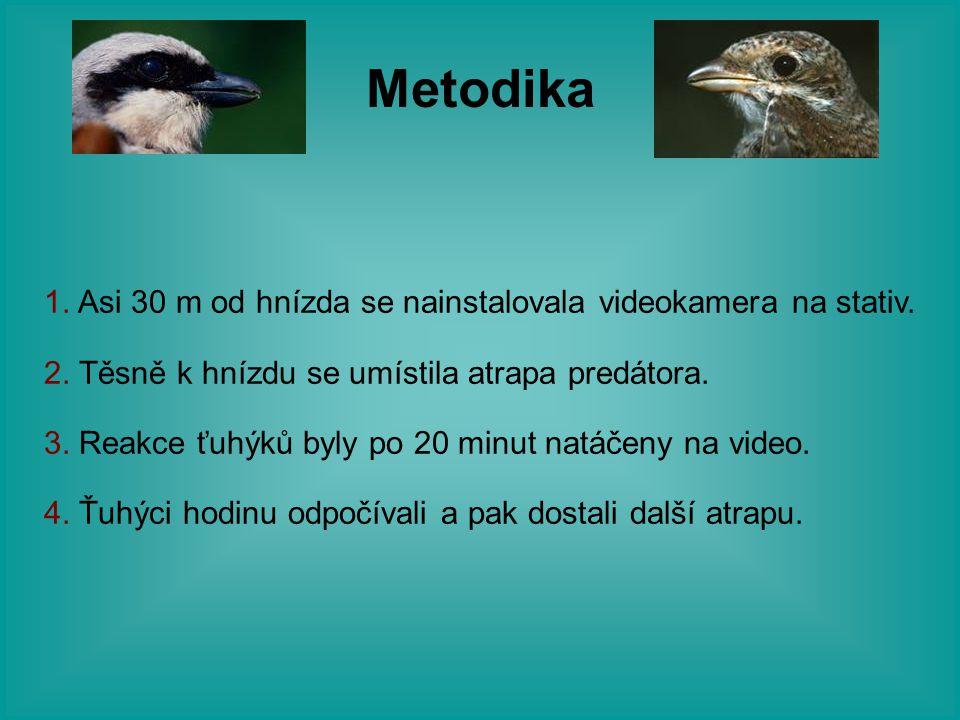 Metodika 1. Asi 30 m od hnízda se nainstalovala videokamera na stativ. 2. Těsně k hnízdu se umístila atrapa predátora. 3. Reakce ťuhýků byly po 20 min