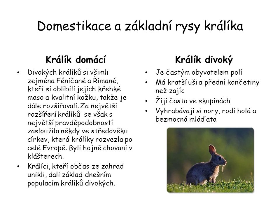 Králík domácí Asi 40cm dlouhý Váží asi od 1 do 2,5kg Žijí ve skupinách Samice po 30 dnech březosti rodí 4 – 8 mláďat do předem připraveného a vystlaného pelechu O mláďata se stará několik týdnů (asi 4 – 6 týdnů) Králíčata se mohou ještě v osmém týdnu dožadovat kojení Samice s malými králíčaty v kotci