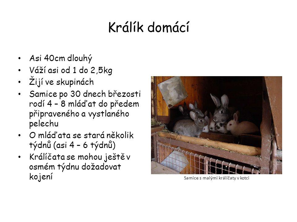 Zdroje Učebnice Fraus – Přírodopis 8 stránka 24 Králíci.cz