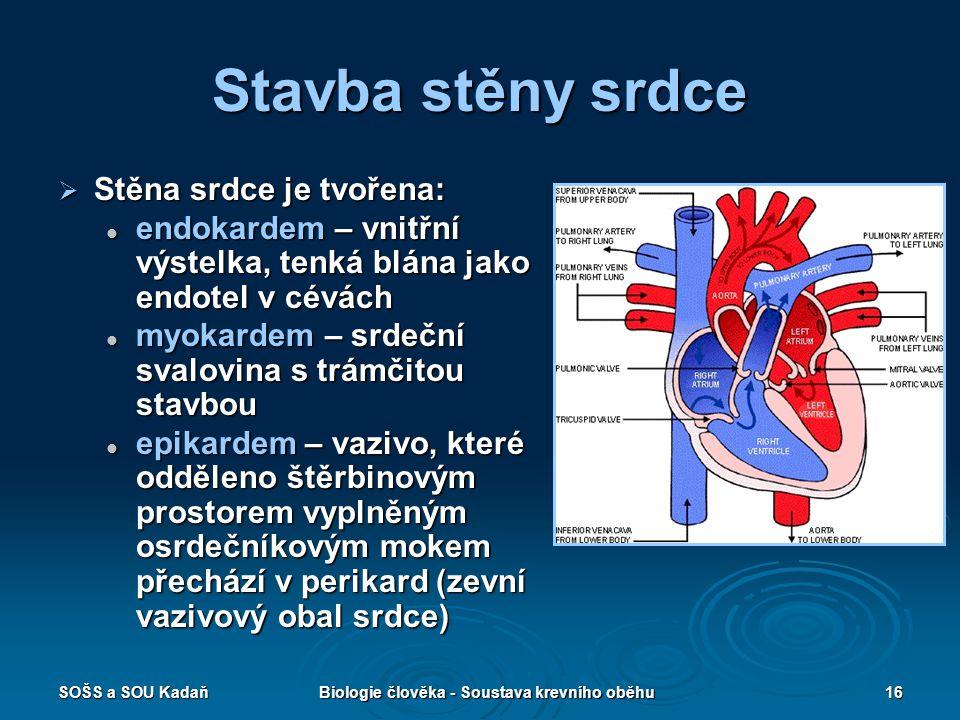 SOŠS a SOU KadaňBiologie člověka - Soustava krevního oběhu16 Stavba stěny srdce  Stěna srdce je tvořena: endokardem – vnitřní výstelka, tenká blána j