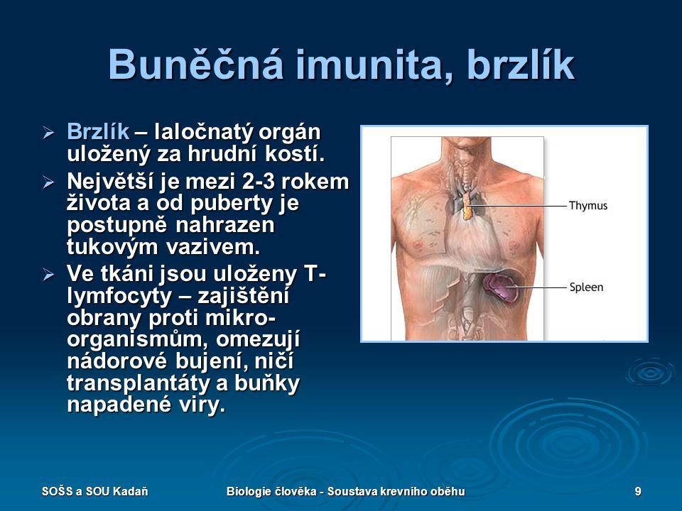 SOŠS a SOU KadaňBiologie člověka - Soustava krevního oběhu9 Buněčná imunita, brzlík  Brzlík – laločnatý orgán uložený za hrudní kostí.  Největší je