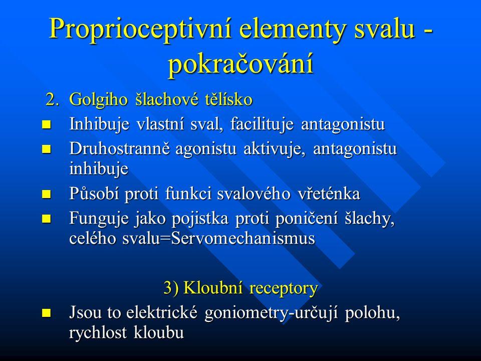 Proprioceptivní elementy svalu - pokračování 2. Golgiho šlachové tělísko 2. Golgiho šlachové tělísko Inhibuje vlastní sval, facilituje antagonistu Inh