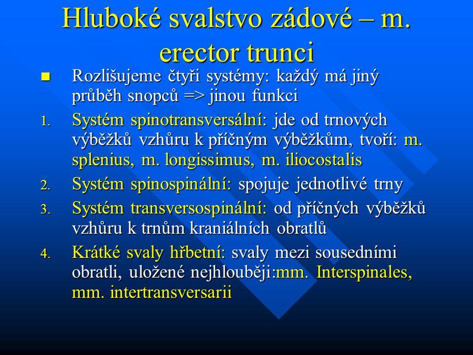 Hluboké svalstvo zádové – m. erector trunci Rozlišujeme čtyři systémy: každý má jiný průběh snopců => jinou funkci Rozlišujeme čtyři systémy: každý má