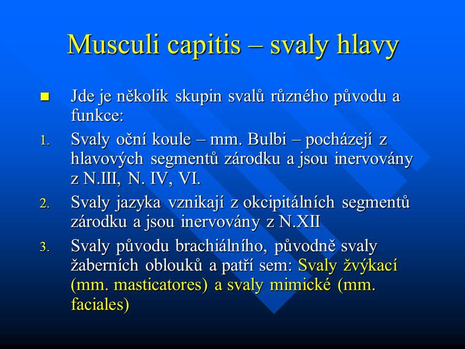 Musculi capitis – svaly hlavy Jde je několik skupin svalů různého původu a funkce: Jde je několik skupin svalů různého původu a funkce: 1. Svaly oční