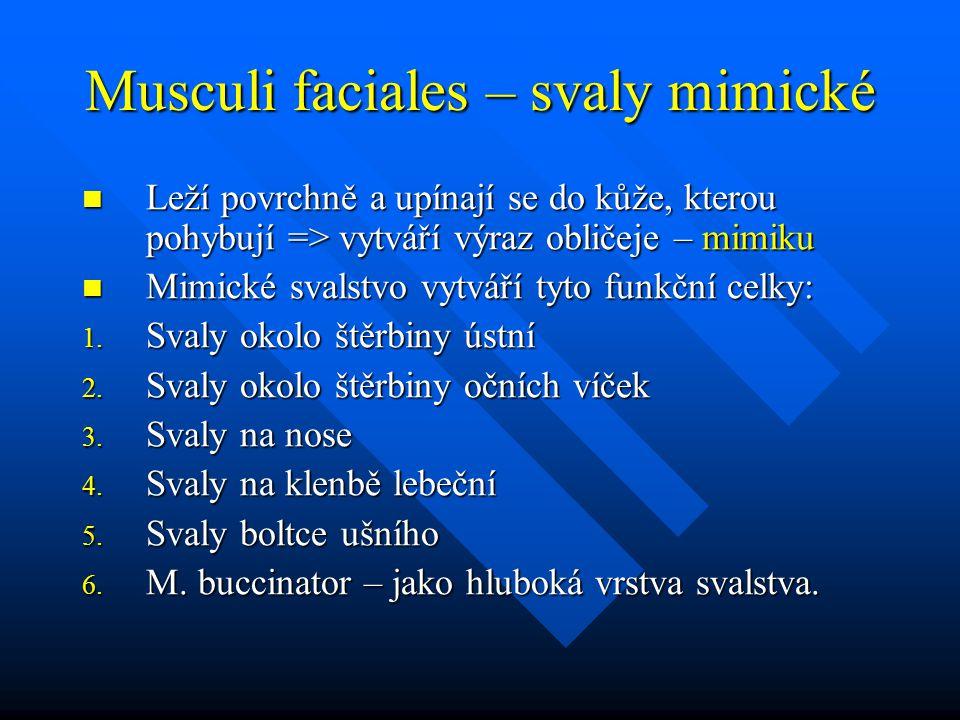 Musculi faciales – svaly mimické Leží povrchně a upínají se do kůže, kterou pohybují => vytváří výraz obličeje – mimiku Leží povrchně a upínají se do kůže, kterou pohybují => vytváří výraz obličeje – mimiku Mimické svalstvo vytváří tyto funkční celky: Mimické svalstvo vytváří tyto funkční celky: 1.
