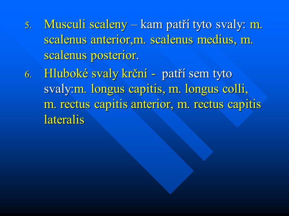 5. Musculi scaleny – kam patří tyto svaly: m. scalenus anterior,m. scalenus medius, m. scalenus posterior. 6. Hluboké svaly krční - patří sem tyto sva
