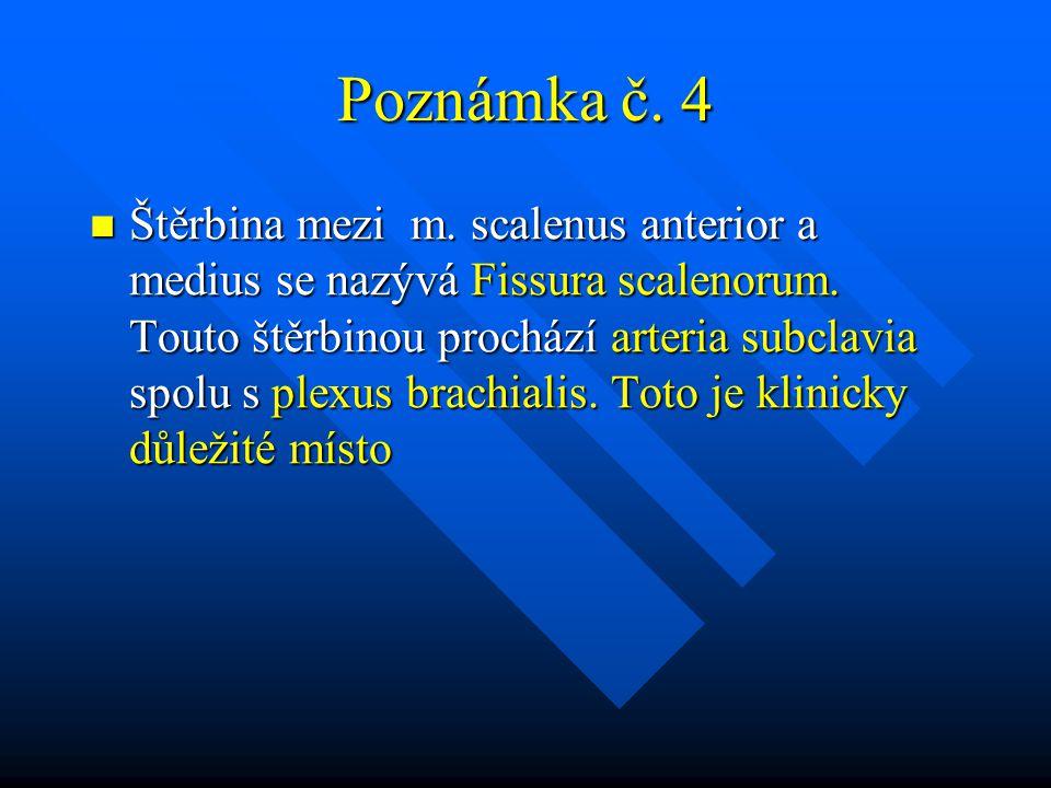 Poznámka č. 4 Štěrbina mezi m. scalenus anterior a medius se nazývá Fissura scalenorum. Touto štěrbinou prochází arteria subclavia spolu s plexus brac