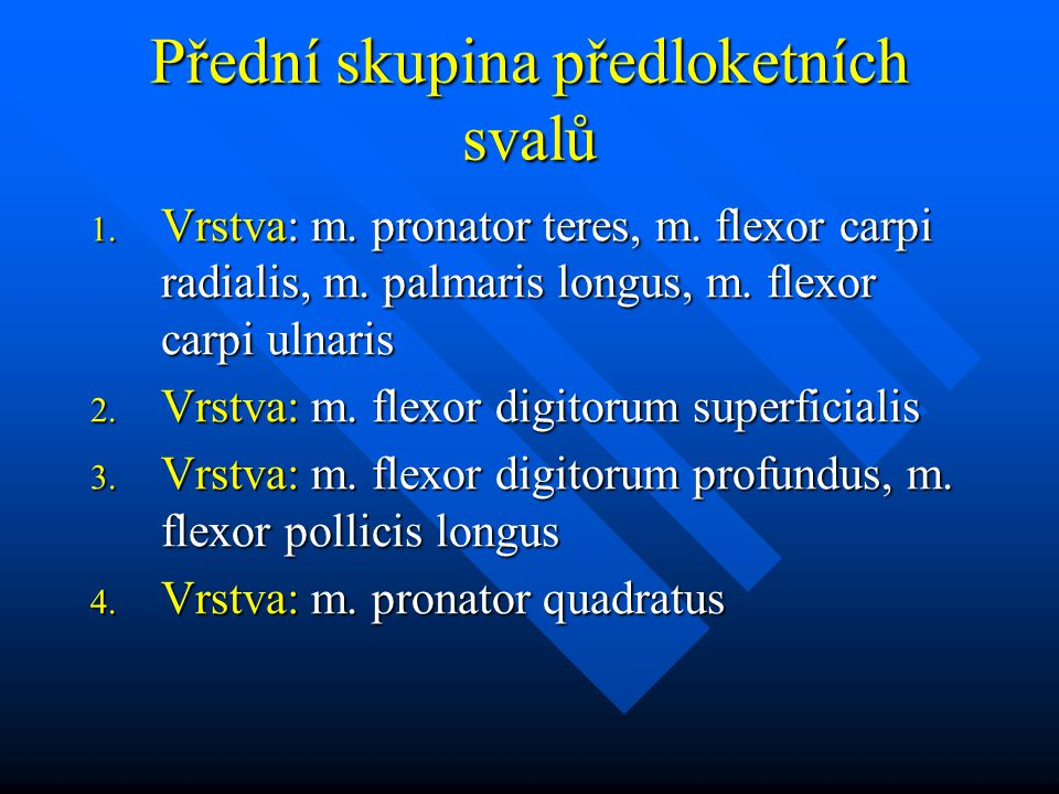 Přední skupina předloketních svalů 1.Vrstva: m. pronator teres, m.
