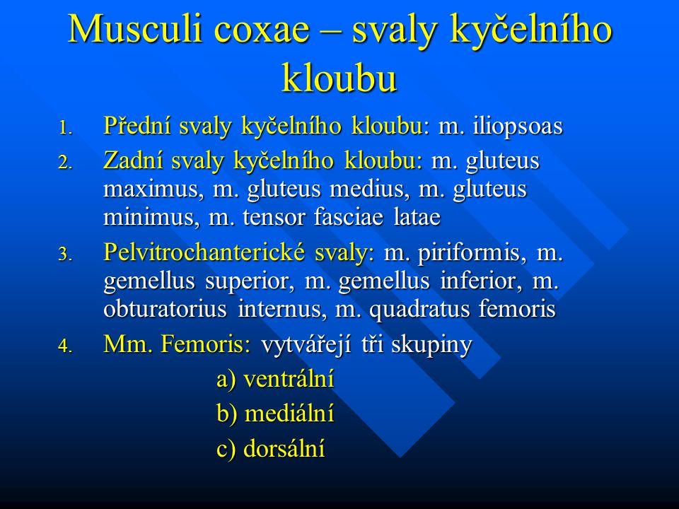 Musculi coxae – svaly kyčelního kloubu 1. Přední svaly kyčelního kloubu: m. iliopsoas 2. Zadní svaly kyčelního kloubu: m. gluteus maximus, m. gluteus