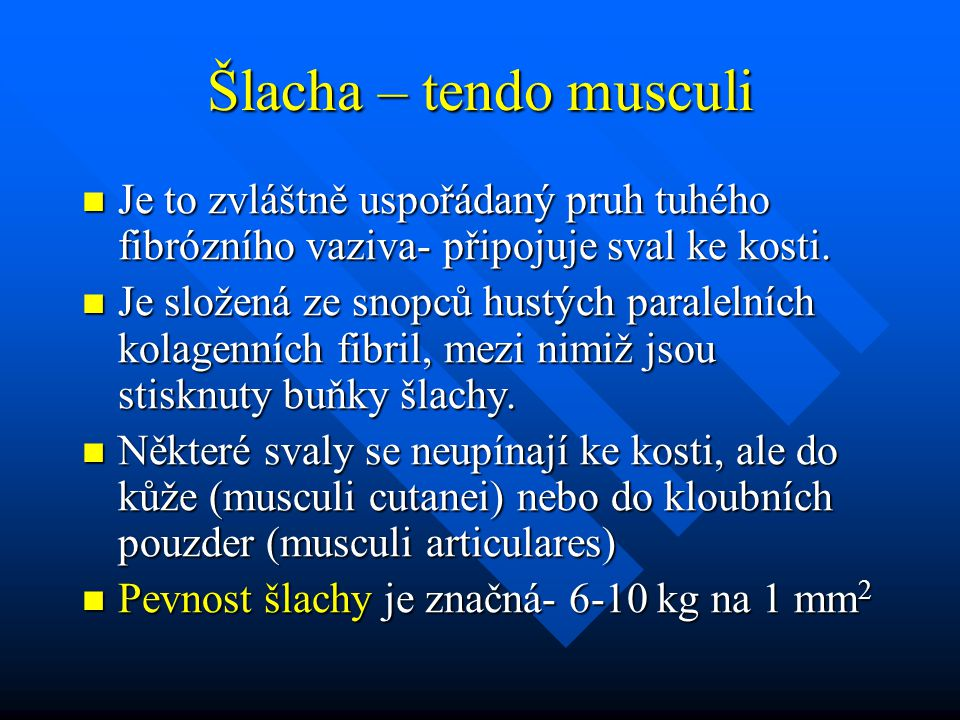 Šlacha – tendo musculi Je to zvláštně uspořádaný pruh tuhého fibrózního vaziva- připojuje sval ke kosti. Je to zvláštně uspořádaný pruh tuhého fibrózn