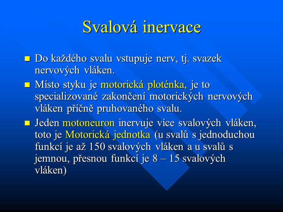 Svalová inervace Do každého svalu vstupuje nerv, tj. svazek nervových vláken. Do každého svalu vstupuje nerv, tj. svazek nervových vláken. Místo styku