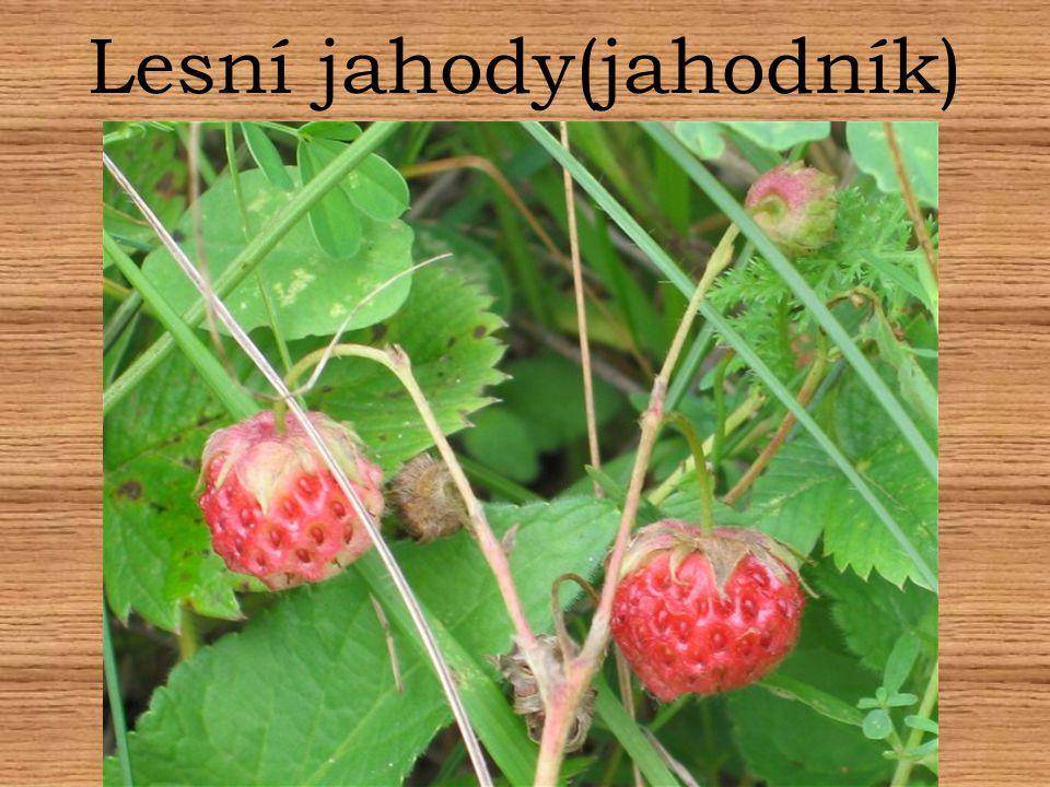 Lesní jahody(jahodník)