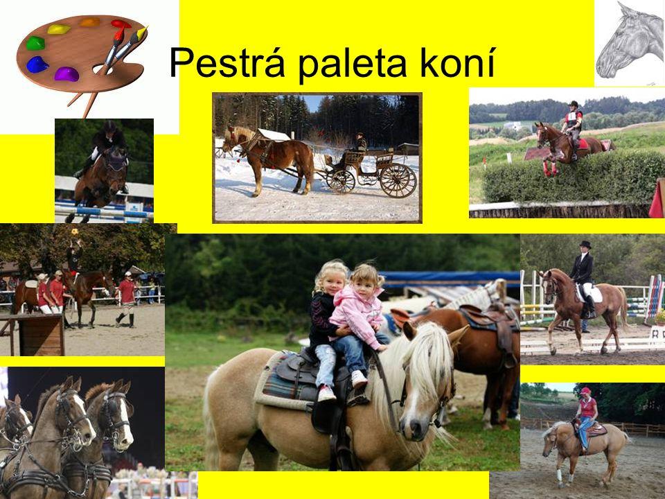 Pestrá paleta koní