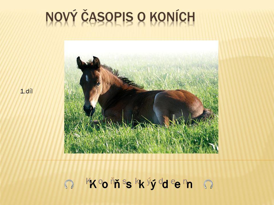  Modlitba koně  Výstroj – uzdečka  Vaše příběhy  Dopisy  Soutěž  Plakát  Obrázky koní