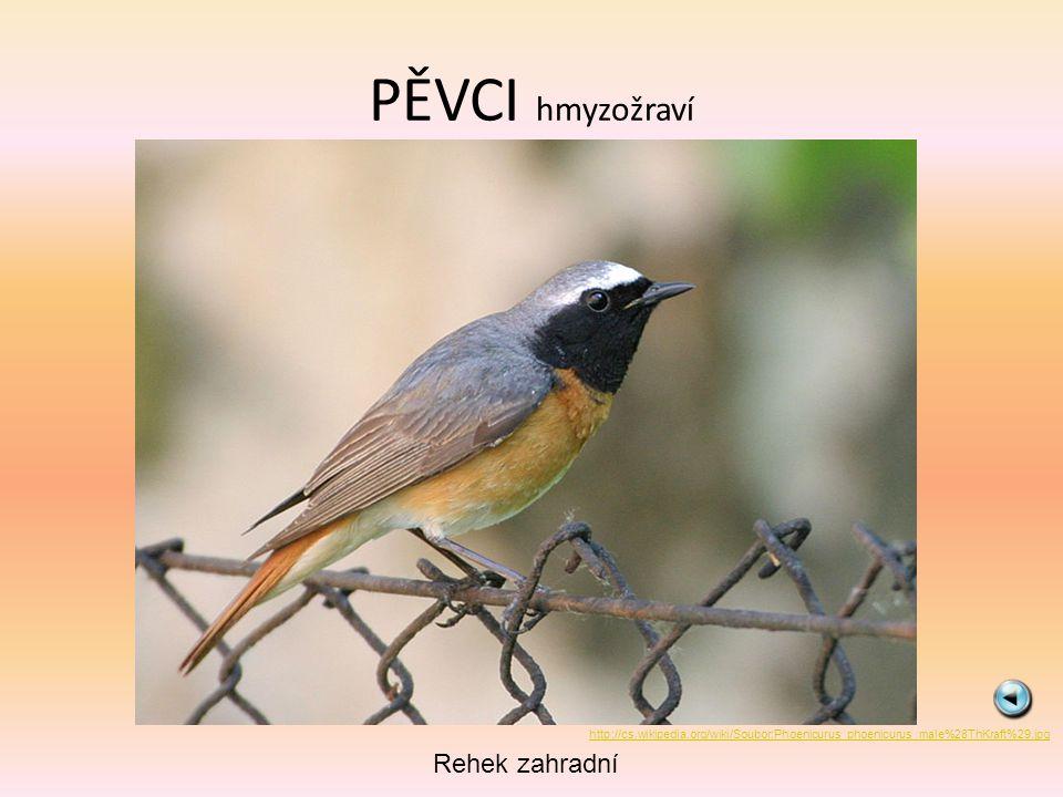PĚVCI hmyzožraví Rehek zahradní http://cs.wikipedia.org/wiki/Soubor:Phoenicurus_phoenicurus_male%28ThKraft%29.jpg