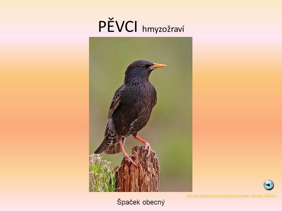 PĚVCI hmyzožraví Špaček obecný http://cs.wikipedia.org/wiki/Soubor:European_Starling_2006.jpg