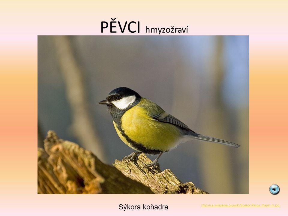 PĚVCI hmyzožraví Brhlík lesní http://cs.wikipedia.org/wiki/Soubor:Sitta_europaea_wildlife_2_1.jpg