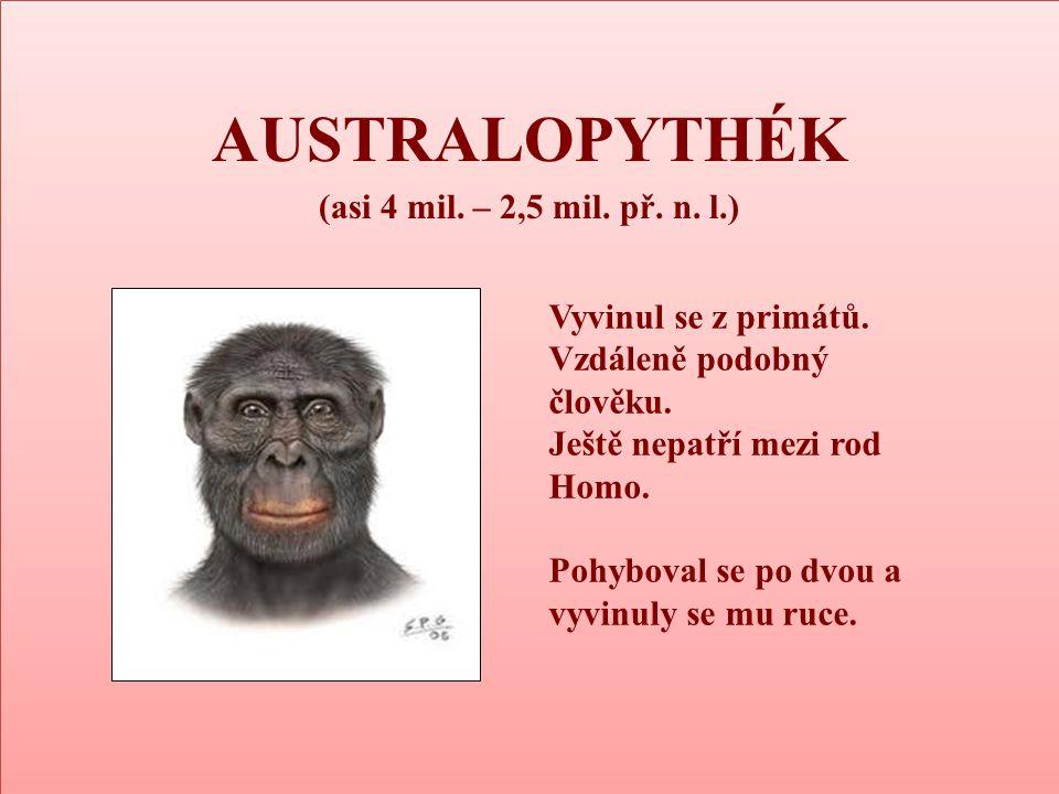 AUSTRALOPYTHÉK (asi 4 mil. – 2,5 mil. př. n. l.) AUSTRALOPYTHÉK (asi 4 mil. – 2,5 mil. př. n. l.) Vyvinul se z primátů. Vzdáleně podobný člověku. Ješt