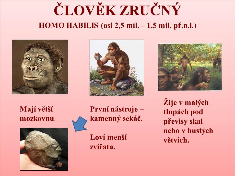 nebo v hustých větvích ČLOVĚK ZRUČNÝ HOMO HABILIS (asi 2,5 mil. – 1,5 mil. př.n.l.) ČLOVĚK ZRUČNÝ HOMO HABILIS (asi 2,5 mil. – 1,5 mil. př.n.l.) Mají