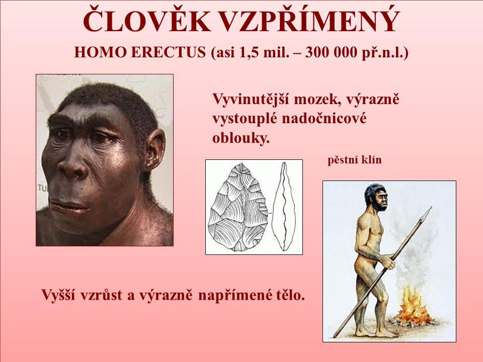 ČLOVĚK VZPŘÍMENÝ HOMO ERECTUS (asi 1,5 mil. – 300 000 př.n.l.) ČLOVĚK VZPŘÍMENÝ HOMO ERECTUS (asi 1,5 mil. – 300 000 př.n.l.) Vyvinutější mozek, výraz