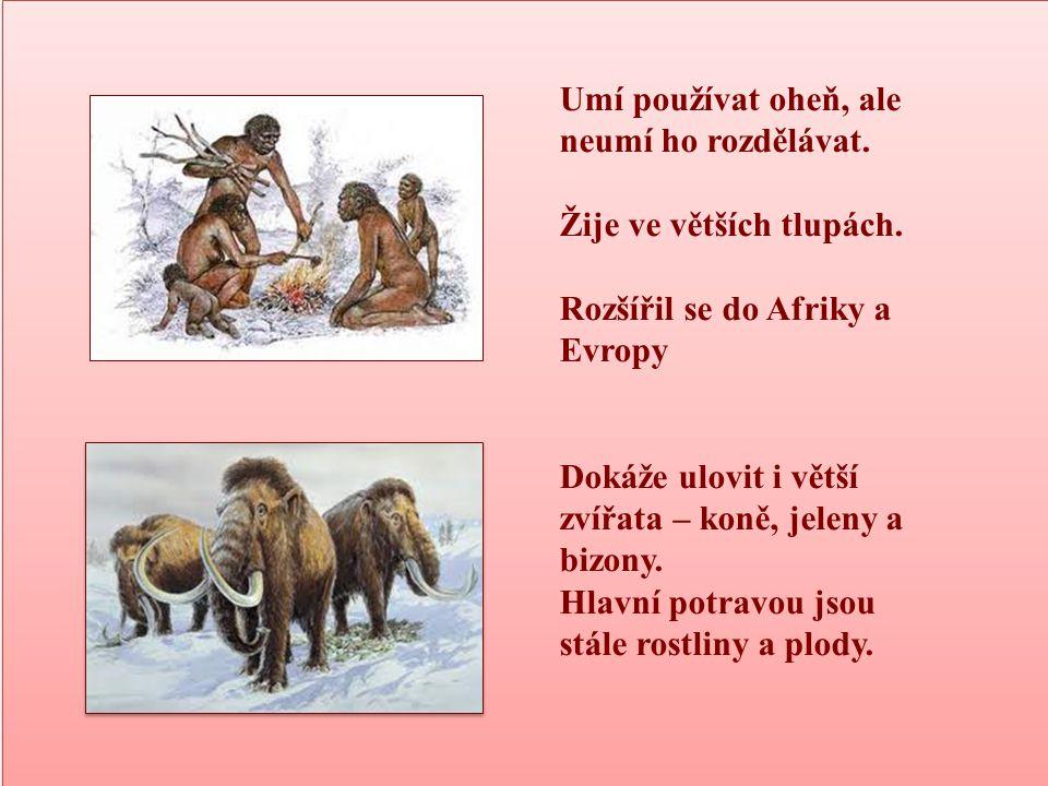 ČLOVĚK ROZUMNÝ HOMO SAPIENS (asi 300 000 – 40 000 př.n.l.) ČLOVĚK ROZUMNÝ HOMO SAPIENS (asi 300 000 – 40 000 př.n.l.) Mozková část stejná jako u dnešního člověka Umí rozdělat oheň.