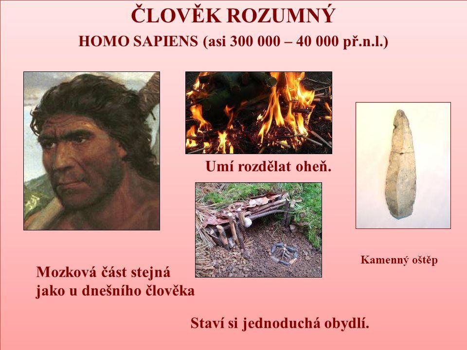 ČLOVĚK ROZUMNÝ HOMO SAPIENS (asi 300 000 – 40 000 př.n.l.) ČLOVĚK ROZUMNÝ HOMO SAPIENS (asi 300 000 – 40 000 př.n.l.) Mozková část stejná jako u dnešn