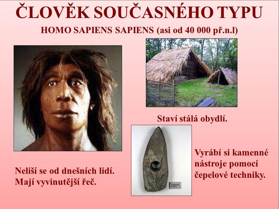 ČLOVĚK SOUČASNÉHO TYPU HOMO SAPIENS SAPIENS (asi od 40 000 př.n.l) ČLOVĚK SOUČASNÉHO TYPU HOMO SAPIENS SAPIENS (asi od 40 000 př.n.l) Neliší se od dne