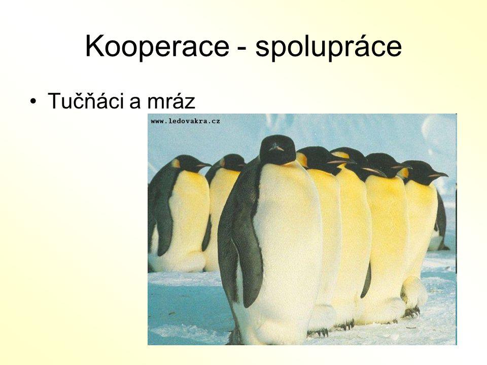 Kooperace - spolupráce Tučňáci a mráz