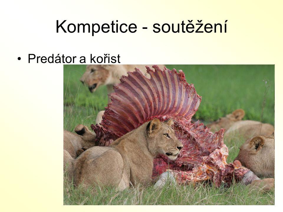 Kompetice - soutěžení Predátor a kořist
