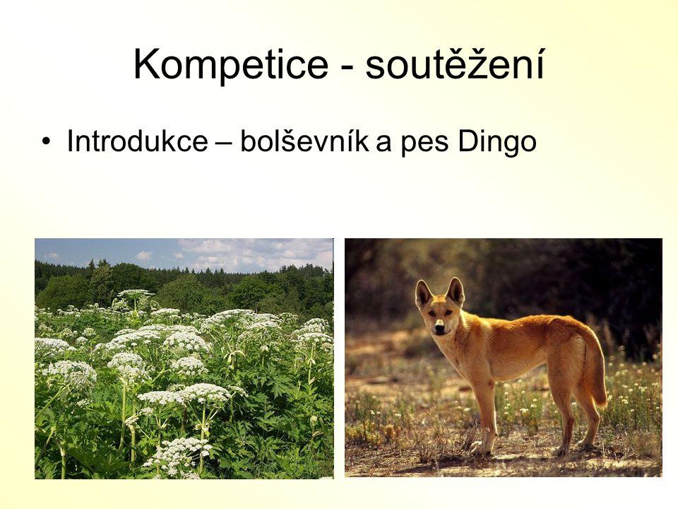 Kompetice - soutěžení Introdukce – bolševník a pes Dingo