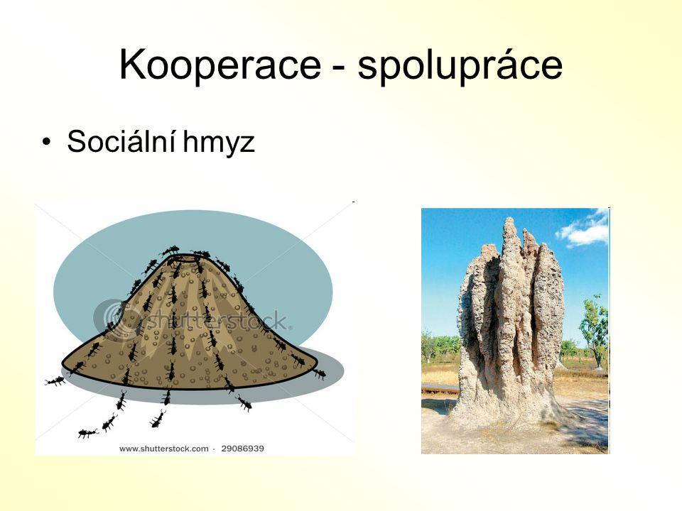 Kooperace - spolupráce Sociální hmyz