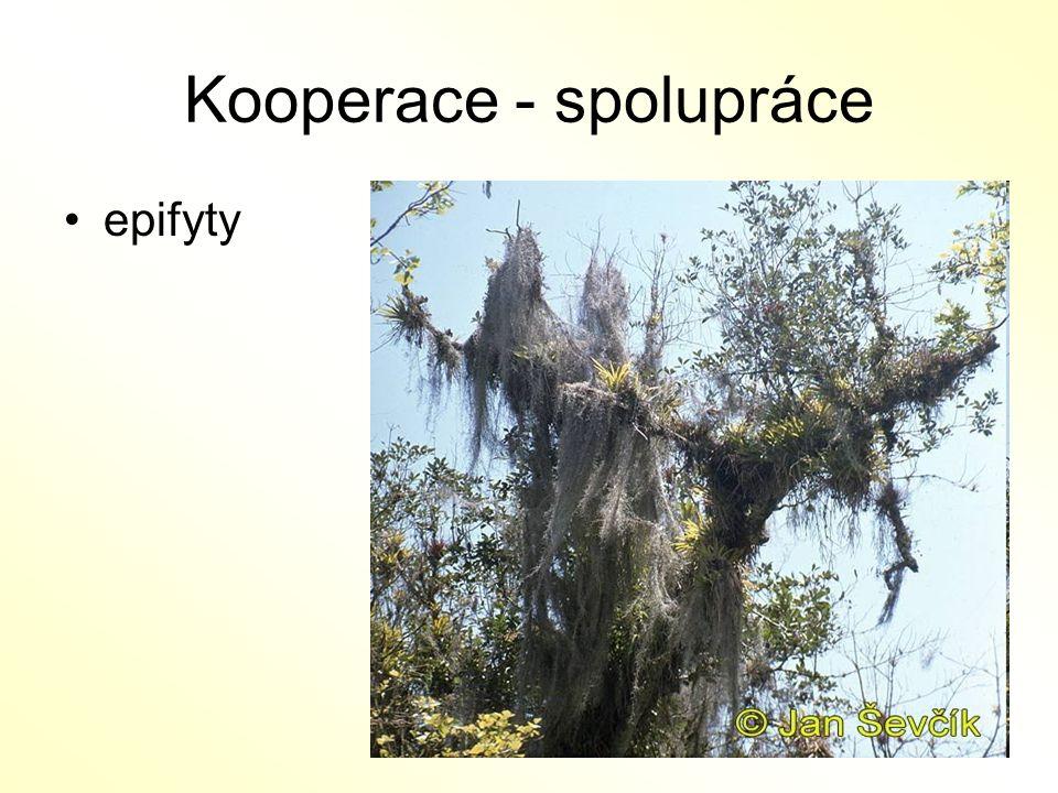 Kooperace - spolupráce epifyty