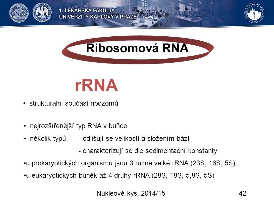Nukleové kys. 2014/1542 Ribosomová RNA rRNA strukturální součást ribozomů nejrozšířenější typ RNA v buňce několik typů - odlišují se velikostí a slože
