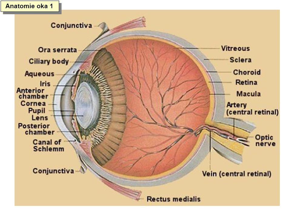 Anatomie oka 1
