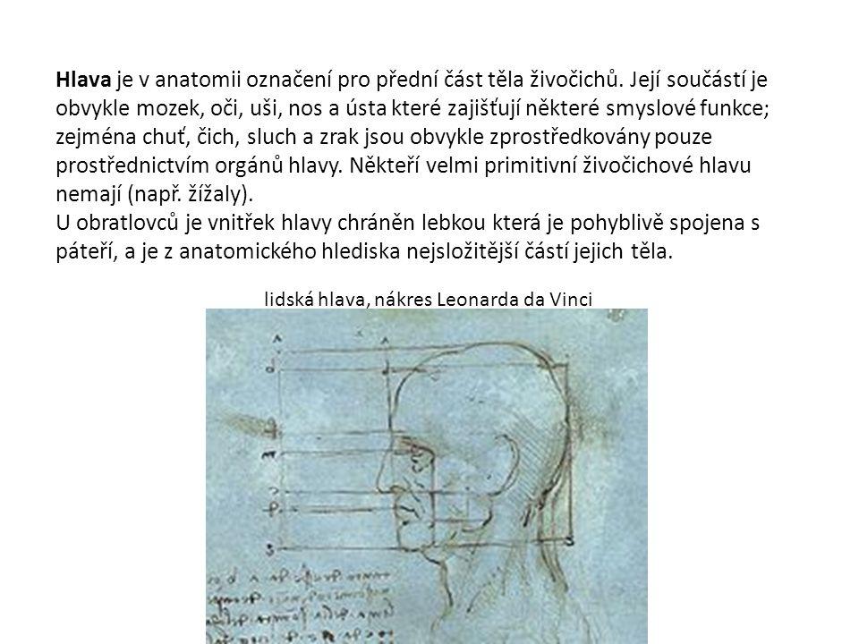 Hlava je v anatomii označení pro přední část těla živočichů.