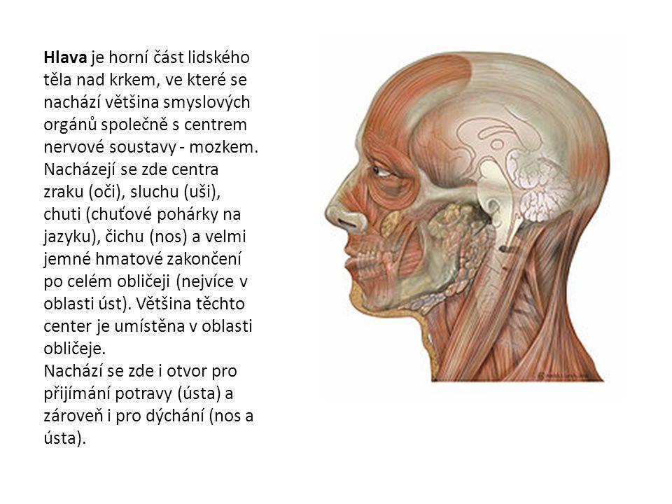 Hlava je horní část lidského těla nad krkem, ve které se nachází většina smyslových orgánů společně s centrem nervové soustavy - mozkem.