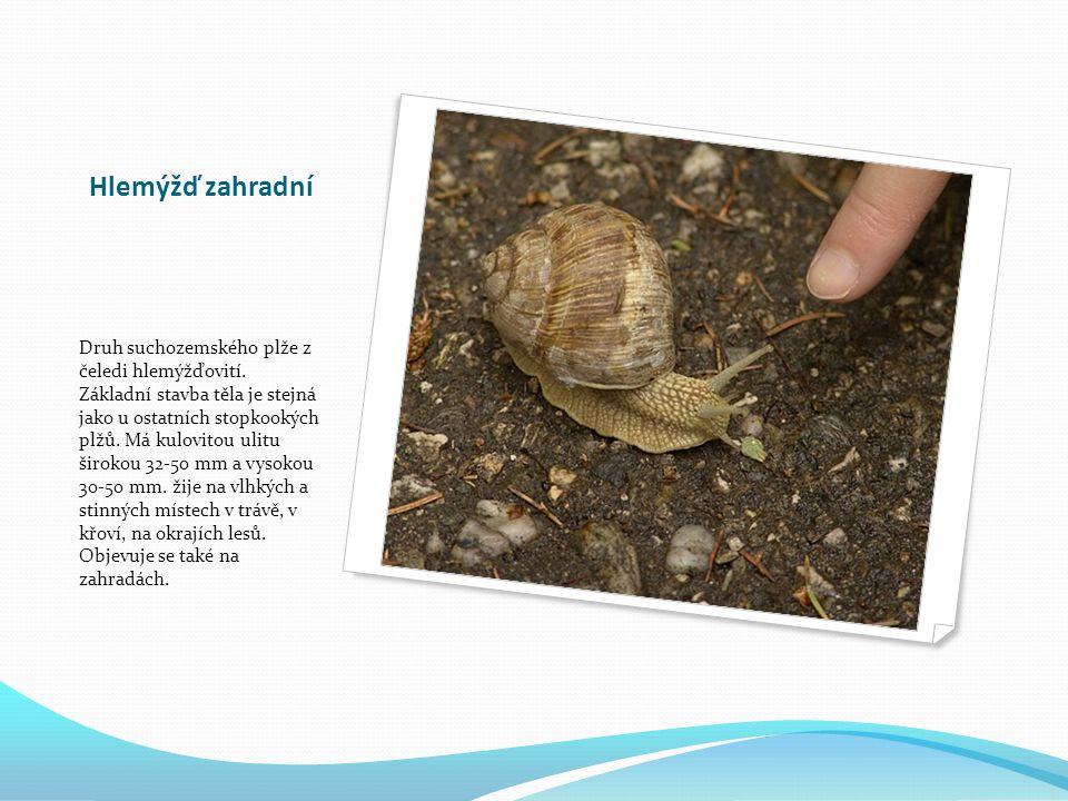 Plzák španělský Plž z čeledi plzákovitých pocházející z Pyrenejského poloostrova, který se poslední dobou šíří Evropou.