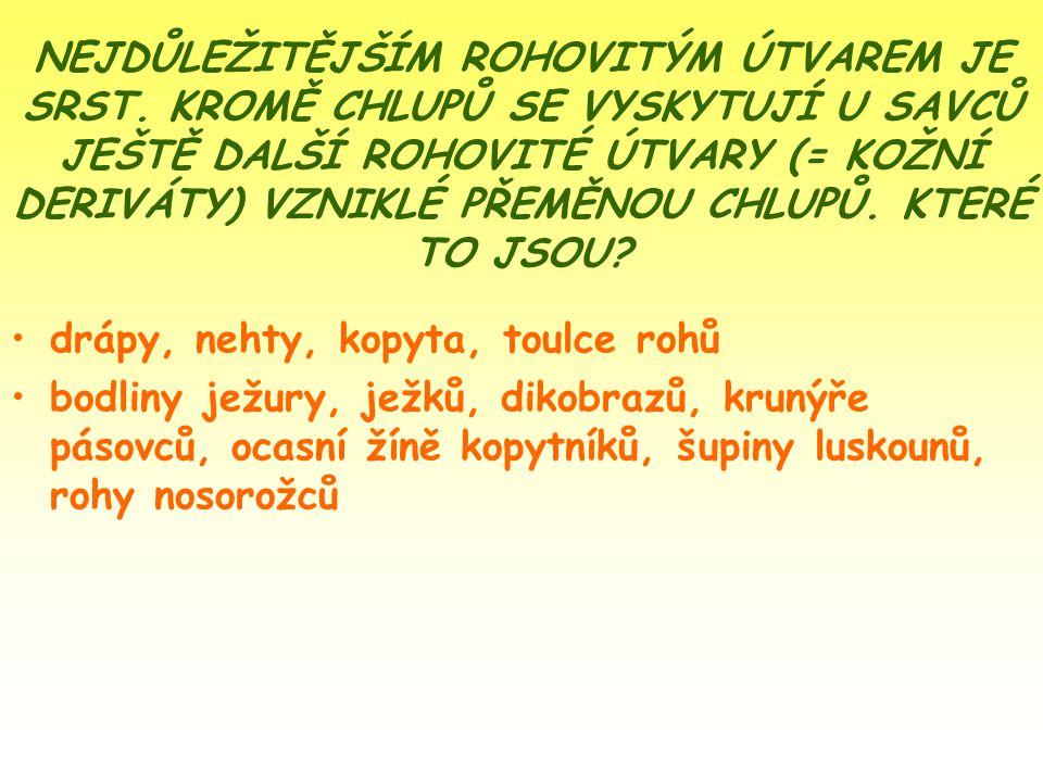 NEJDŮLEŽITĚJŠÍM ROHOVITÝM ÚTVAREM JE SRST. KROMĚ CHLUPŮ SE VYSKYTUJÍ U SAVCŮ JEŠTĚ DALŠÍ ROHOVITÉ ÚTVARY (= KOŽNÍ DERIVÁTY) VZNIKLÉ PŘEMĚNOU CHLUPŮ. K