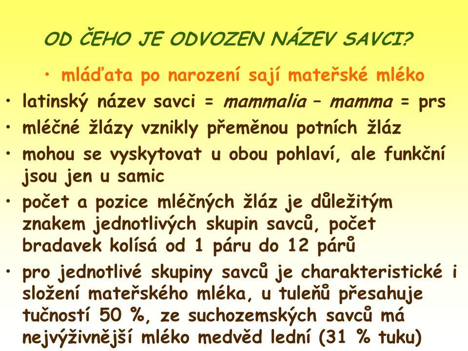 hmatové chlupy na čenichu obr. 9