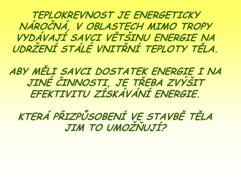 TEPLOKREVNOST JE ENERGETICKY NÁROČNÁ, V OBLASTECH MIMO TROPY VYDÁVAJÍ SAVCI VĚTŠINU ENERGIE NA UDRŽENÍ STÁLÉ VNITŘNÍ TEPLOTY TĚLA. ABY MĚLI SAVCI DOST