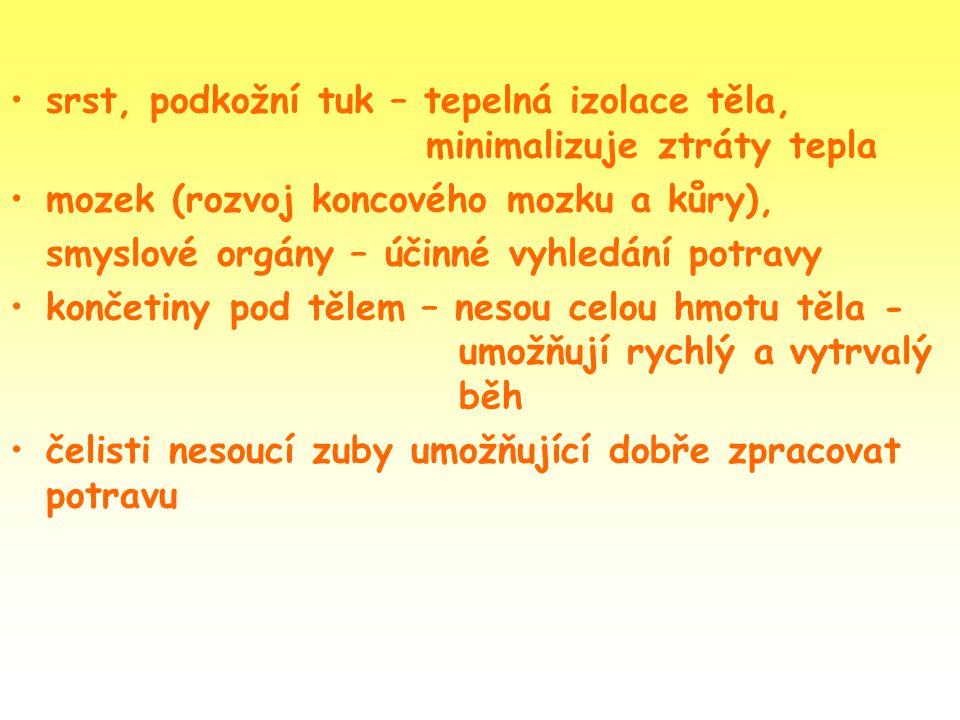 obr. 13 ježek evropský – bodliny - derivát kůže